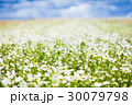 春 泉 ばねの写真 30079798