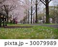 春 桜 公園の写真 30079989