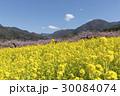 風景 春 桃の花の写真 30084074