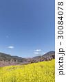 風景 春 桃の花の写真 30084078