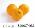宇和ゴールド 柑橘類 果物の写真 30087468