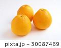 宇和ゴールド 柑橘類 果物の写真 30087469