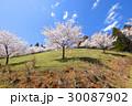 桜 ソメイヨシノ 春の写真 30087902