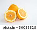 宇和ゴールド 柑橘類 果物の写真 30088828