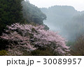 桜 山桜 霧の写真 30089957