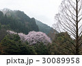 桜 山桜 山の写真 30089958