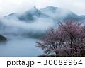 桜 山桜 山の写真 30089964