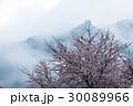 桜 山桜 霧の写真 30089966