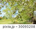新緑 植物 花の写真 30093208