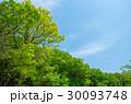 新緑 青空 30093748