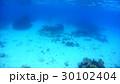 沖縄 阿嘉島のニシハマビーチのウミヘビ 水中写真 30102404