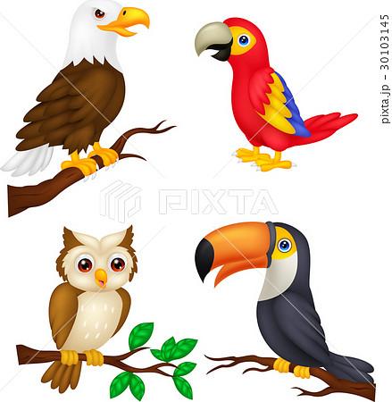 Bird cartoon collection 30103145