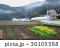 菜の花 里山 畑の写真 30105368