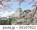 姫路城 桜 青空 30107922