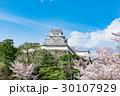 姫路城 桜 青空 30107929