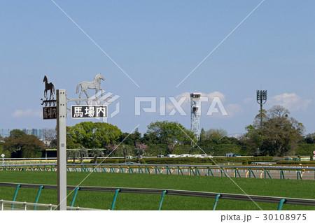 東京競馬場の馬場内案内板とターフ 30108975