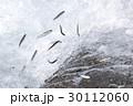 鮎の天然遡上 30112060