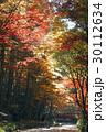 11月 紅葉の小国神社 遠江の秋 30112634