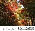 11月 紅葉の小国神社 遠江の秋 30112635