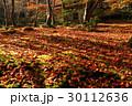 祇王寺 落葉 散紅葉の写真 30112636
