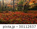 祇王寺 落葉 散紅葉の写真 30112637
