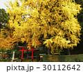 11月 岩戸落葉神社 京都の秋景色 30112642