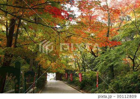 11月 遠州三山の一つ 医王山油山寺 30112809