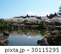 富士山 桜 池の写真 30115295