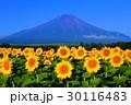 夏 富士山 花畑の写真 30116483