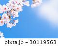 桜 花 開花の写真 30119563