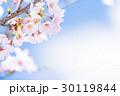 桜 花 開花の写真 30119844