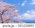 桜 満開 春の写真 30120893