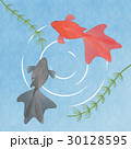 水の中を泳ぐ2匹の金魚 イラスト素材 夏・季節素材・和風素材 30128595