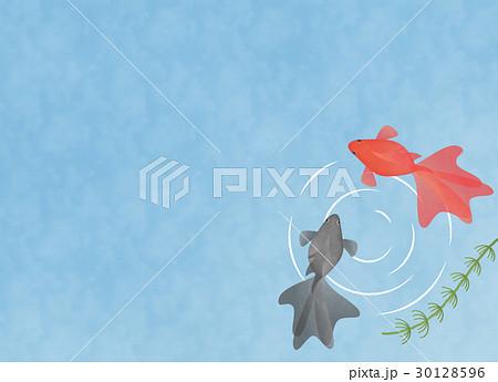 水の中を泳ぐ2匹の金魚 イラスト素材 コピースペース 夏・季節素材・和風素材 30128596