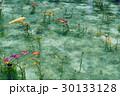 モネの池 池 鯉の写真 30133128