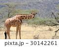 Giraffe 30142261