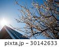 花 樹木 樹の写真 30142633