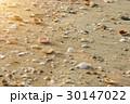 背景 海岸 じゃりの写真 30147022
