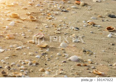 seashell on a beach in the summer with sun light. 30147022