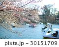 桜とボート 30151709