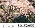 桜 花 ソメイヨシノの写真 30152955