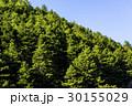 緑 森林 林の写真 30155029