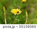 てんとう虫 30156060