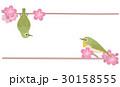 メジロ 鳥 小鳥のイラスト 30158555