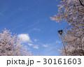 桜 春 桜吹雪の写真 30161603