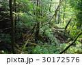 屋久島の自然 30172576