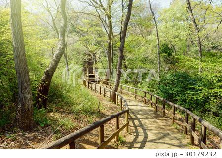森の中のハイキングトレイル 30179232