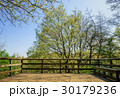 森林 バルコニー 新緑の写真 30179236