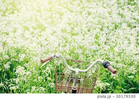 自転車と満開の白い花。 30179330
