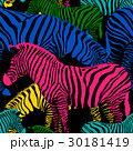 Colorful zebra seamless pattern.  30181419